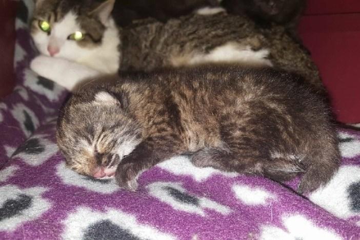 眠るボブチャットの赤ちゃん