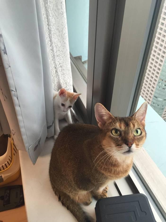 先住猫にちょっかい
