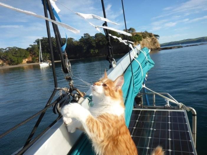 船の様子を見る猫