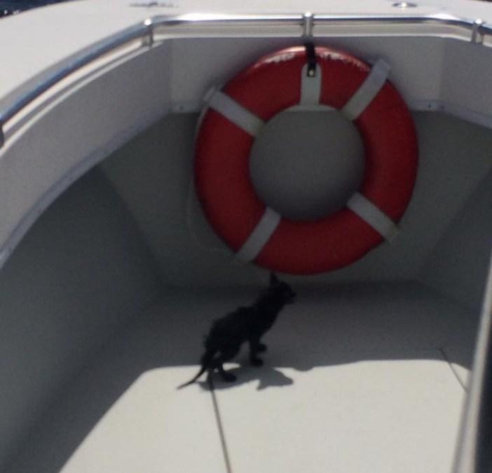 船に乗る子猫