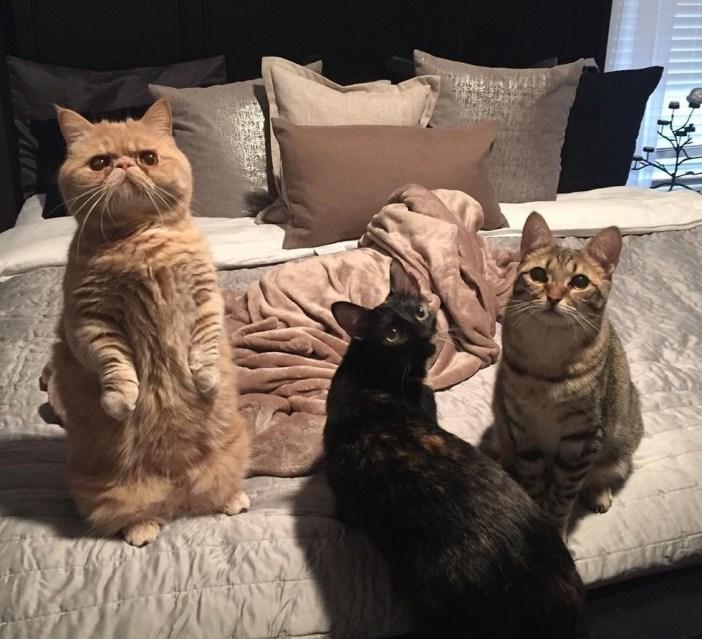 皆で立つ猫