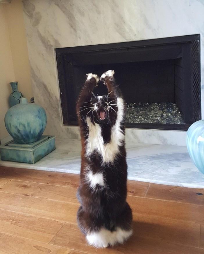 フローリングの上でバンザイする猫