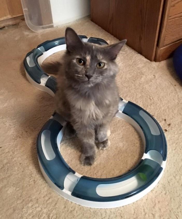 母猫の現在の姿