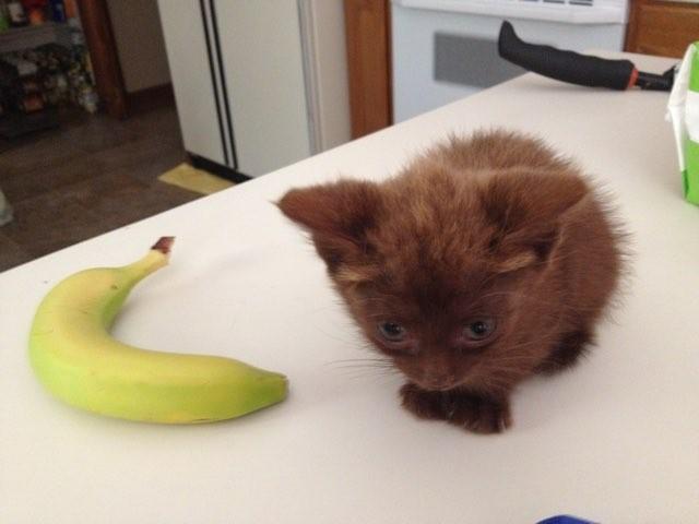 バナナと子猫