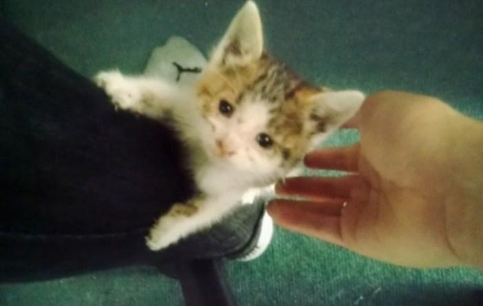 足を登る子猫