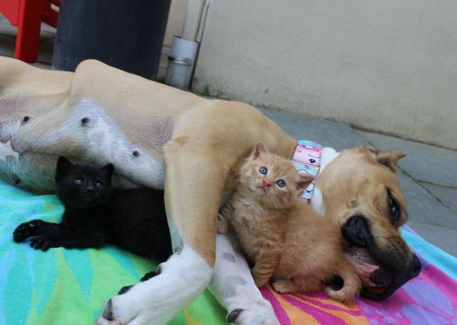犬に寄り添う子猫