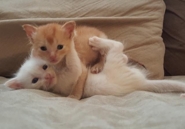 抱き合う子猫