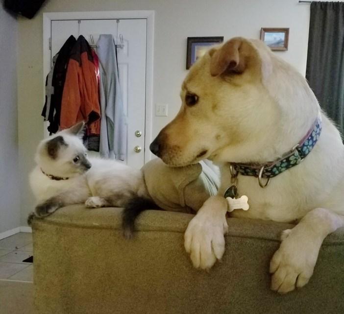同居犬を見つめる子猫