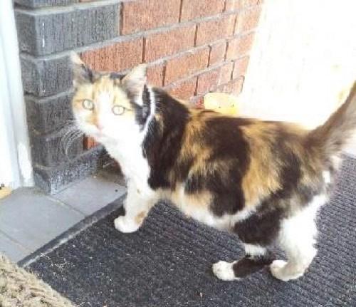 家を訪ねてきた母猫