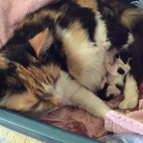 子猫を産む母猫