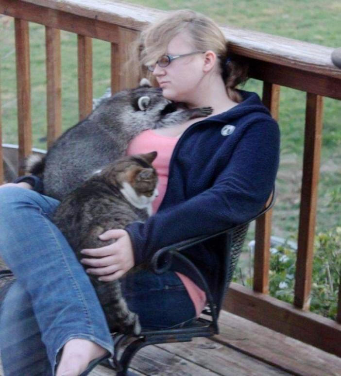 猫とアライグマ