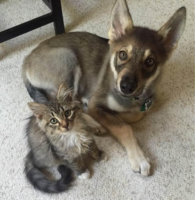 見上げる犬と猫