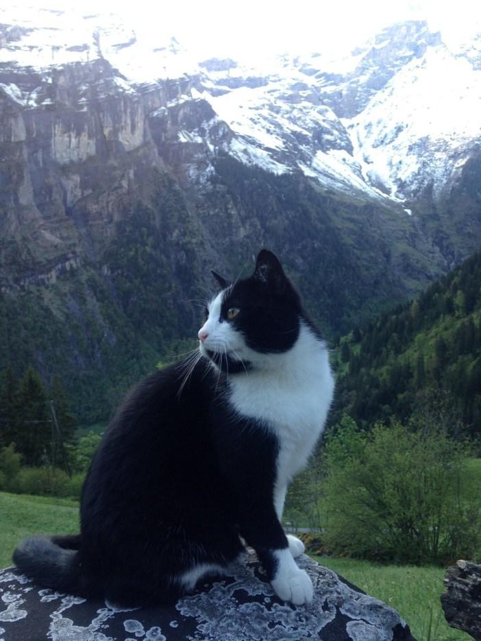 山の中の猫