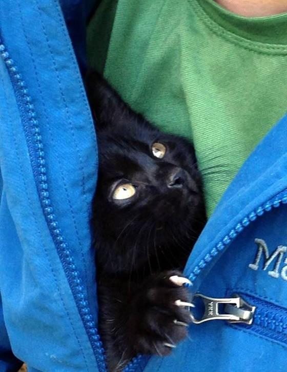 服の中の子猫