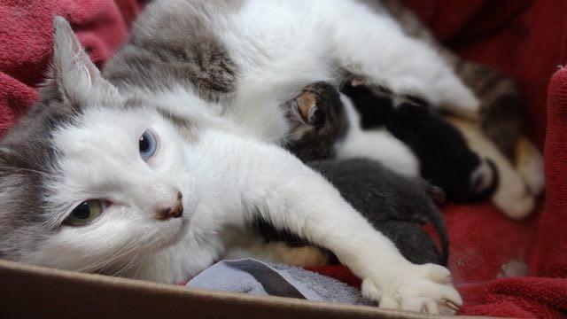 子猫を守る猫