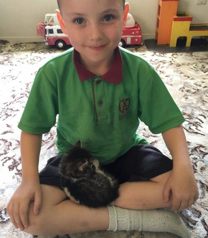 男の子の足の上で丸くなる子猫