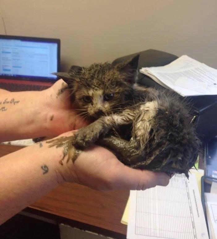 泥まみれの子猫