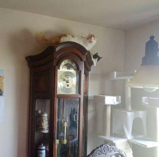 時計に登る猫