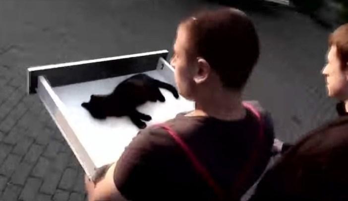 運ばれる猫