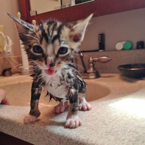洗われる子猫