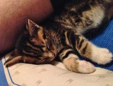 寄り添って眠る子猫