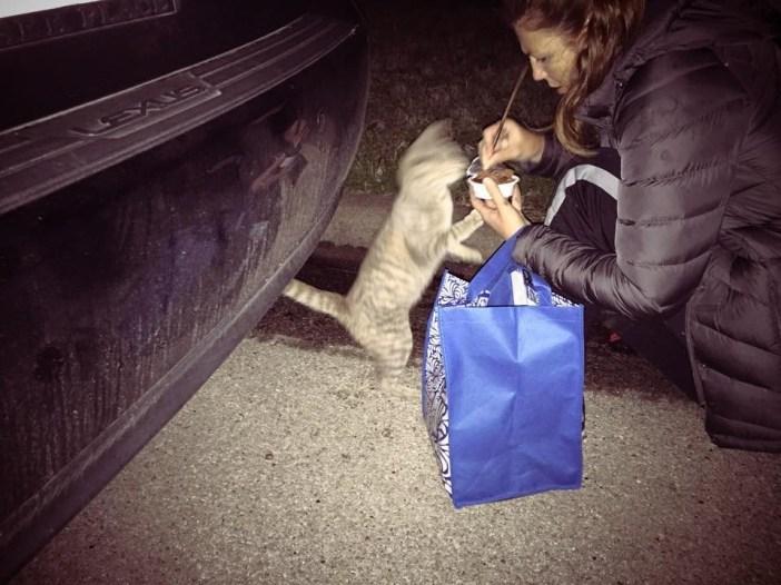 野良猫の世話をする女性