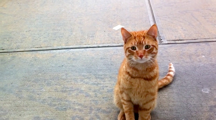 訪ねてきた野良猫
