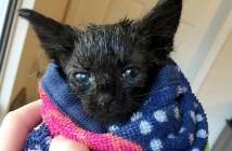 トルネードの嵐から救出された子猫