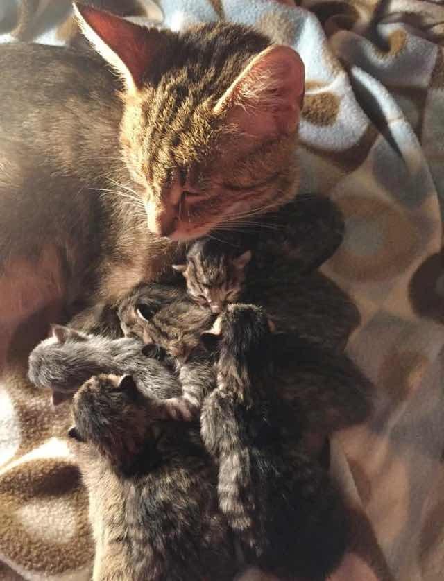 子猫と幸せそうな母猫
