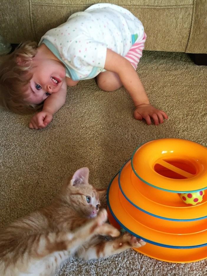 子猫を見つめる女の子