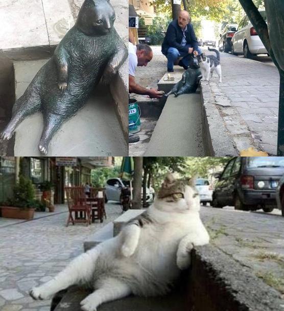 肘をつく猫