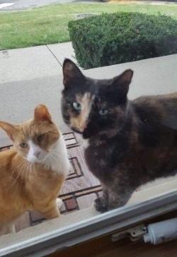 見上げる猫達