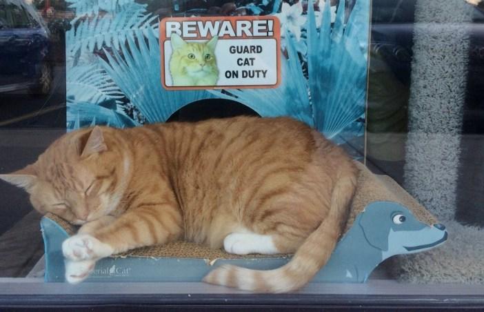 お店の中の猫