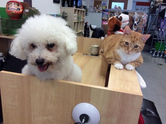 犬の友達といっしょの猫