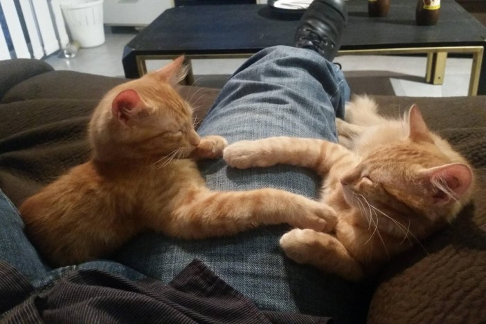 くつろぐ子猫達