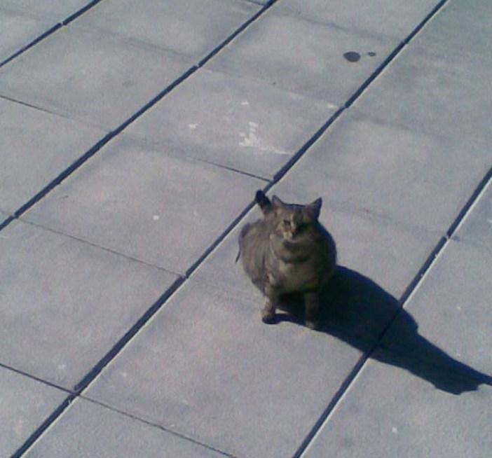 やってきた母猫