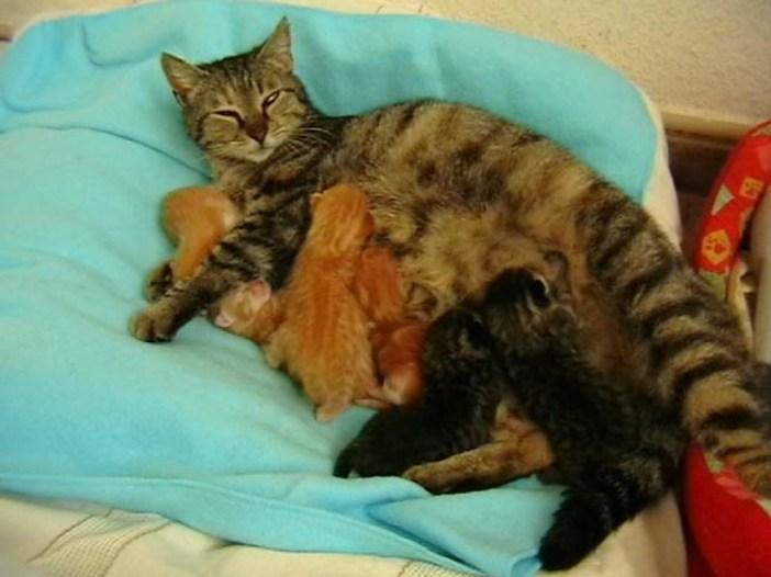 楽しそうな猫の親子