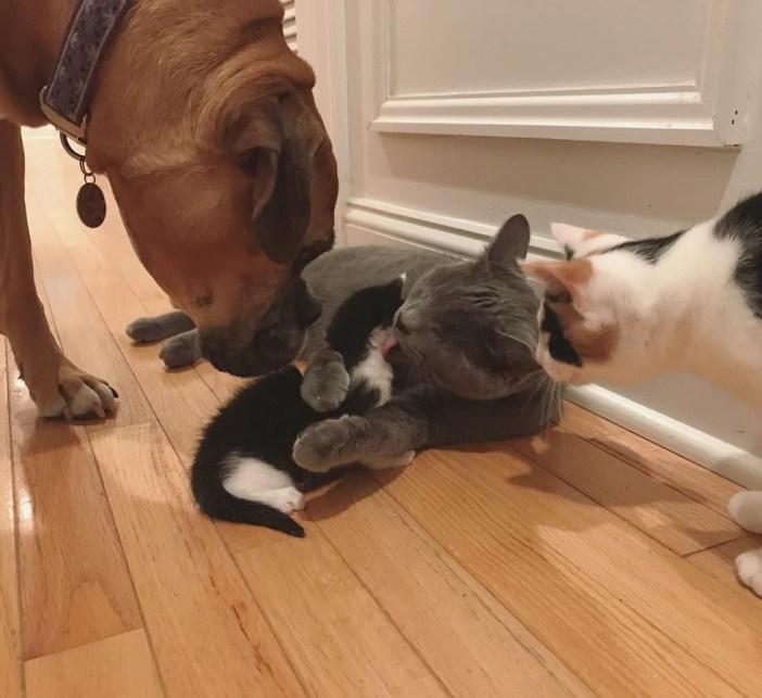幸せそうな犬と猫と子猫