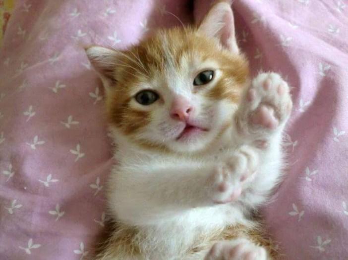 可愛い表情の子猫
