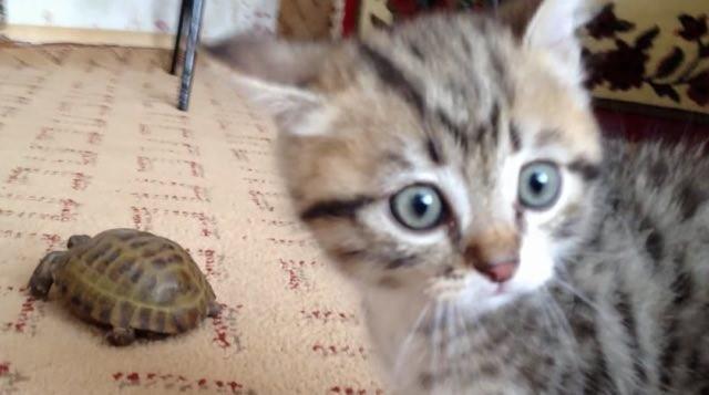 何これ子猫