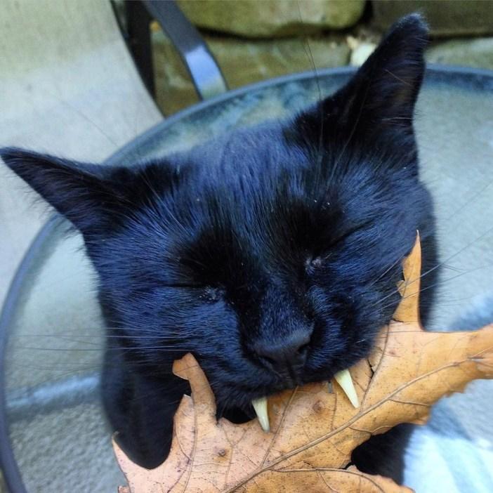 葉っぱを噛む猫