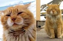 北極圏の猫