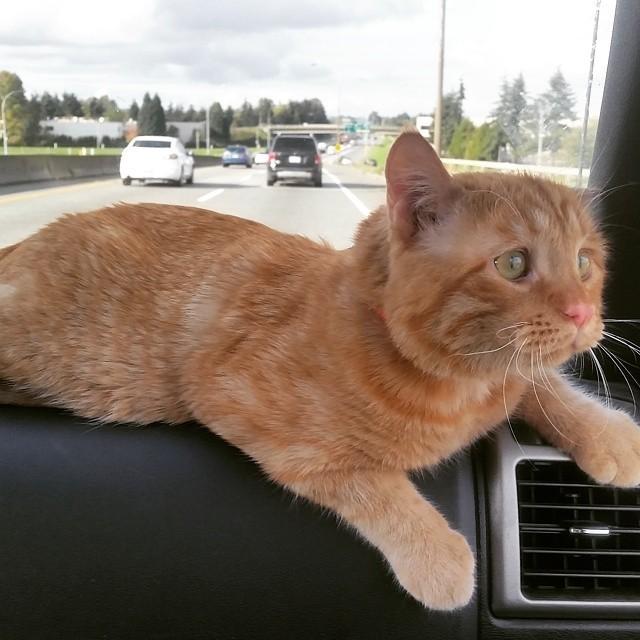 家に移動する猫