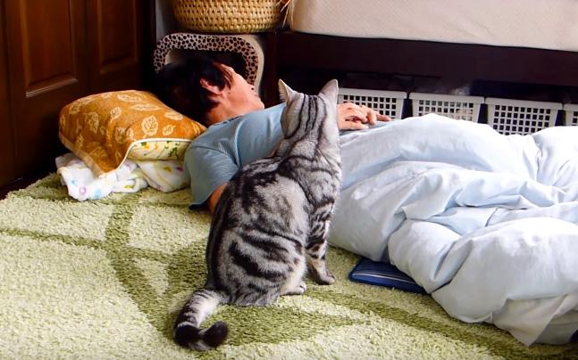 おばあちゃんを心配する猫