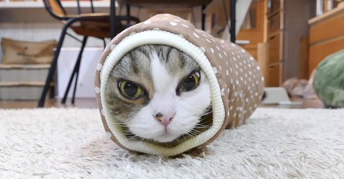 袖にハマる猫