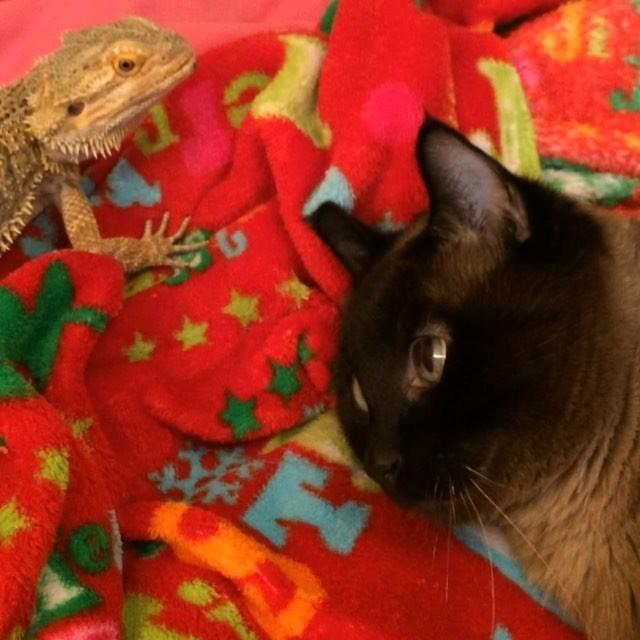 友達のトカゲと猫