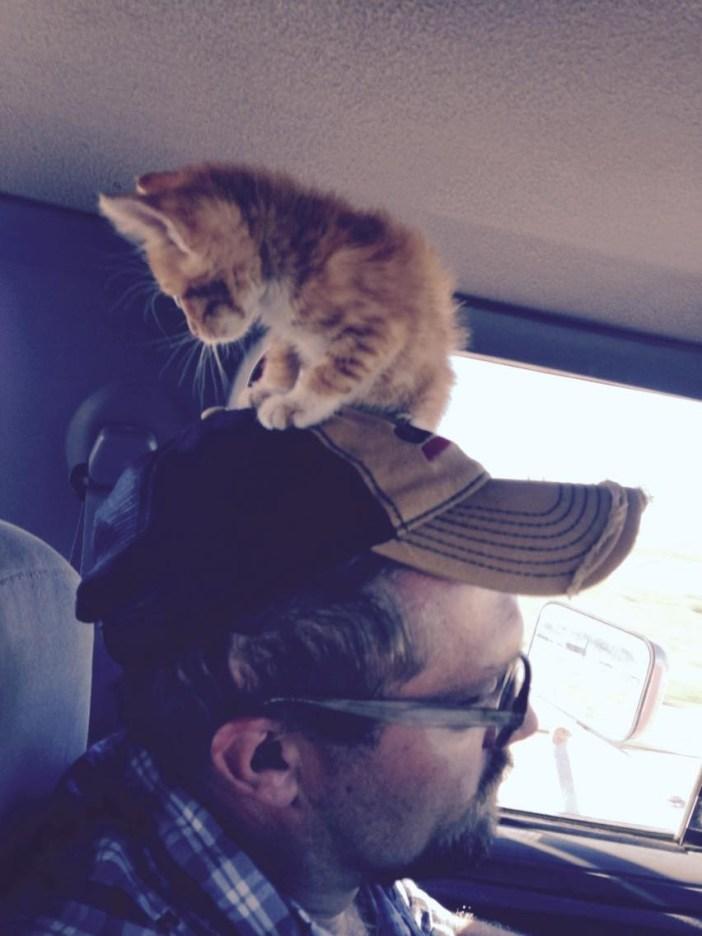 帽子の上の子猫