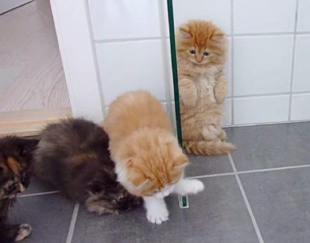 思わず立ち上げる子猫