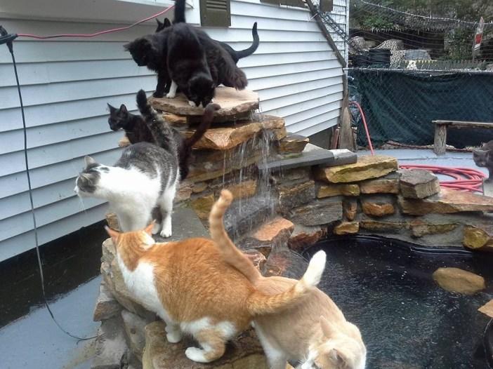 楽しそうに暮らす猫