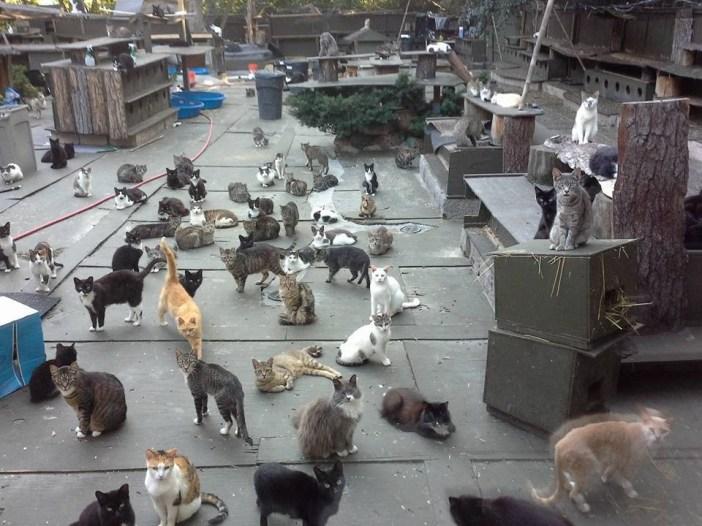 300匹の猫